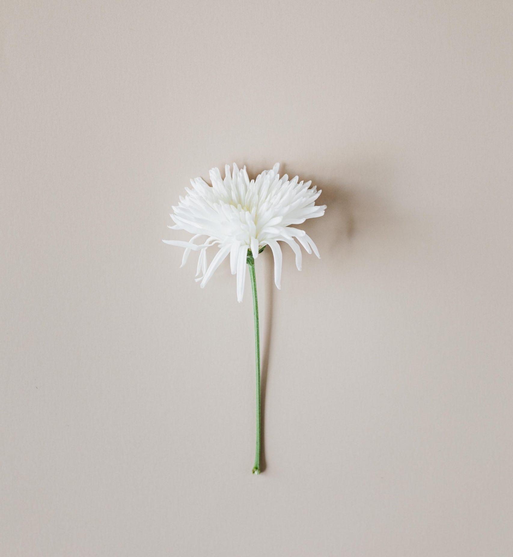 White Single Flower