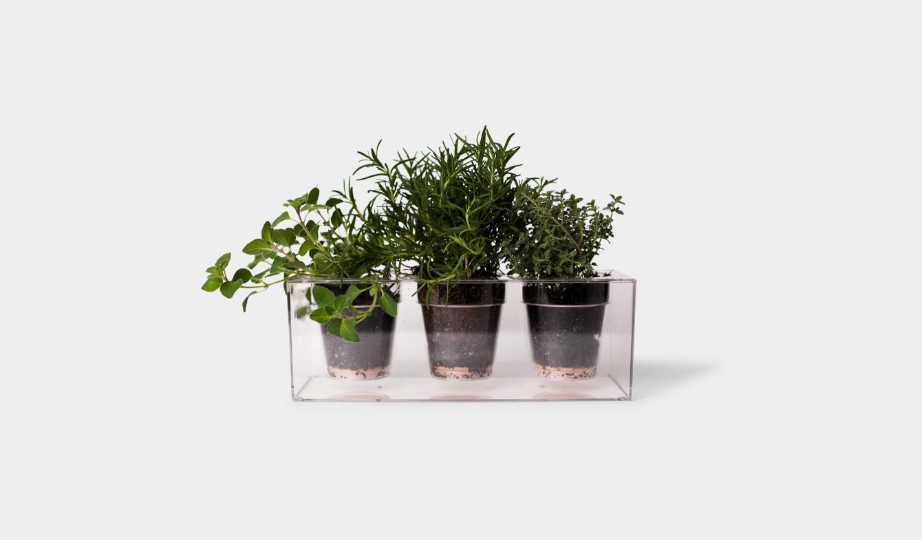 Plant's Trio